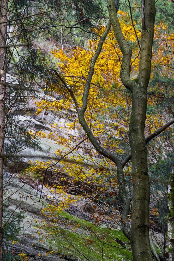 У отвесных скал, Павлинин каньон, Чешская Швейцария