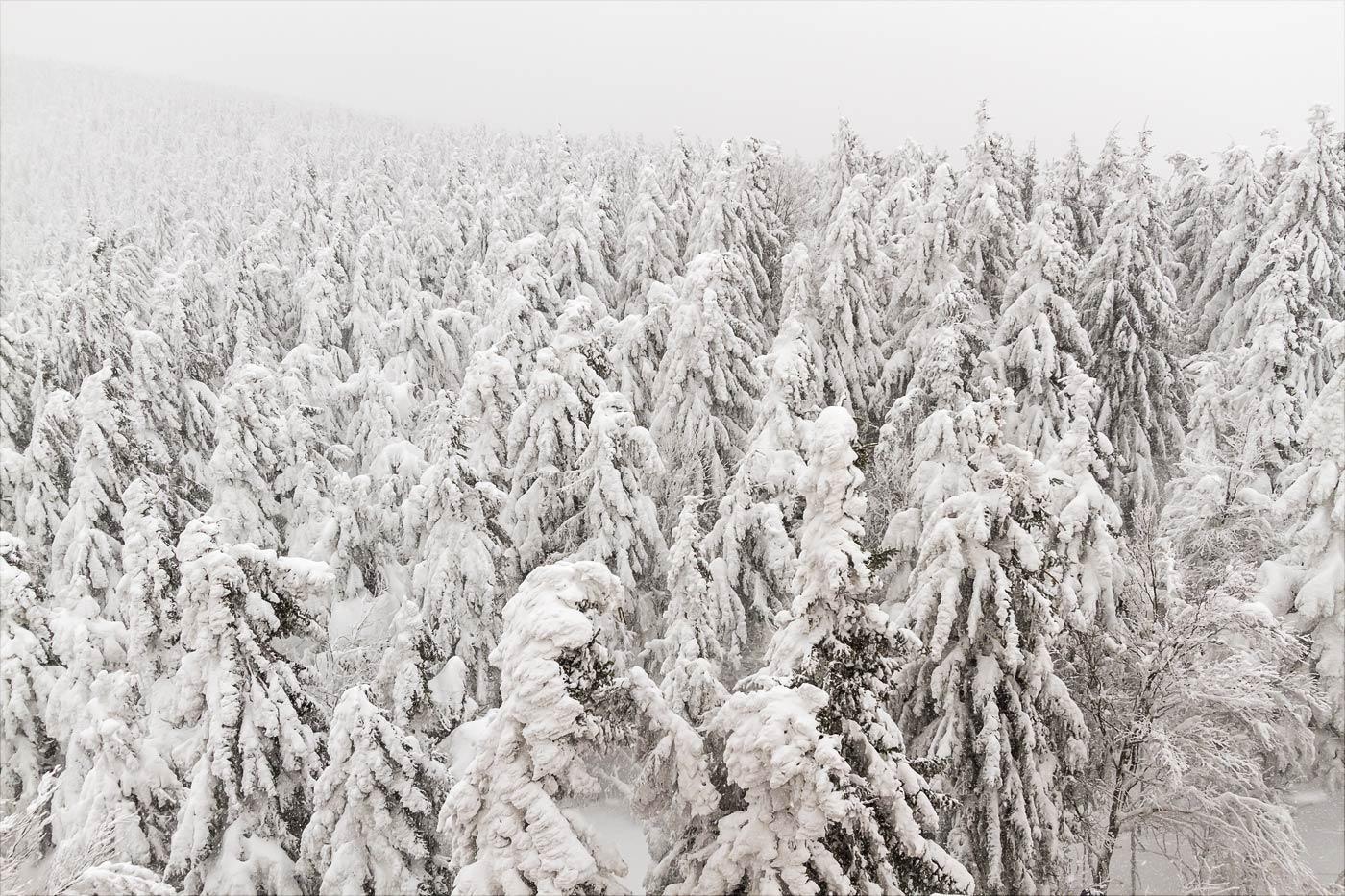 Заснеженный лес, Пустевны, Бескидские горы