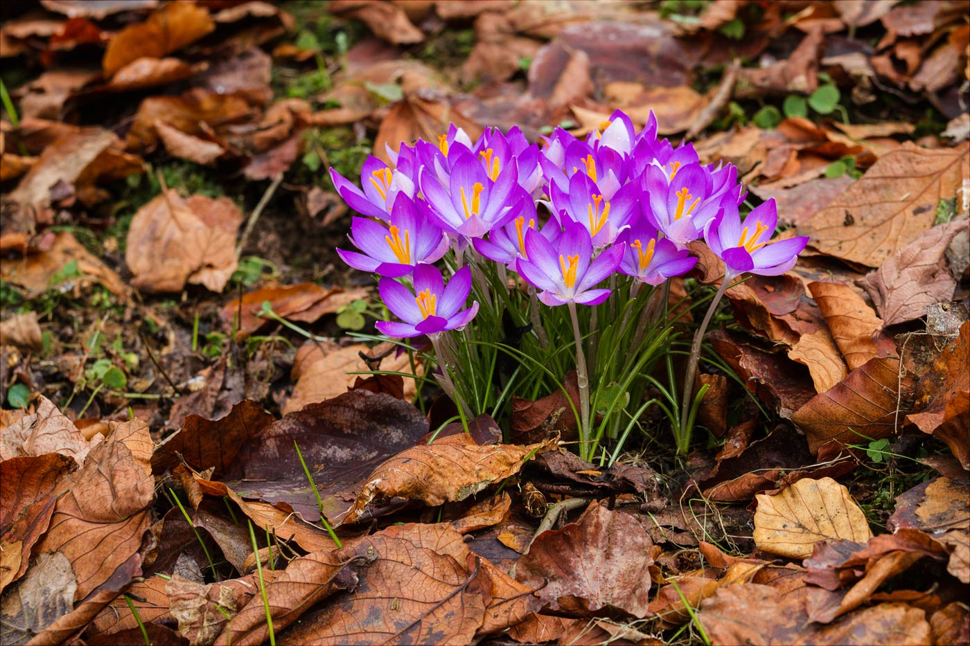 Весна в Пругоницком парке