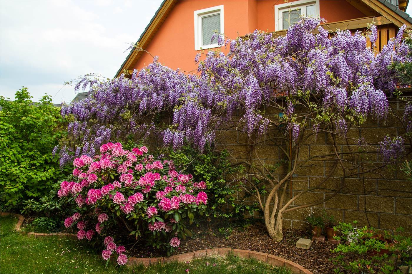 В нашем саду