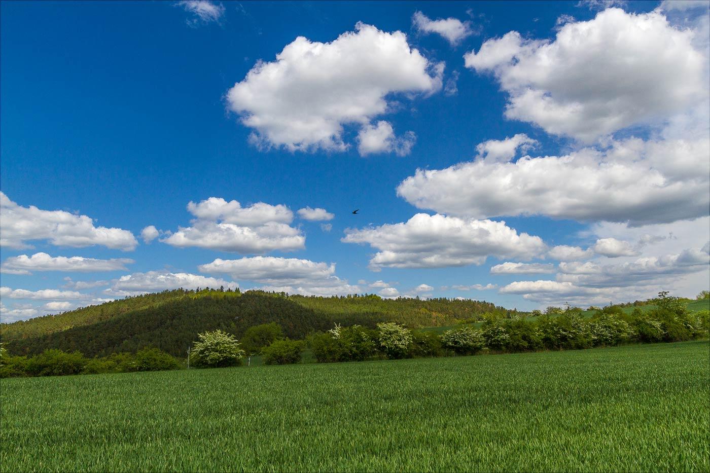 Зеленые холмы у Влтавы
