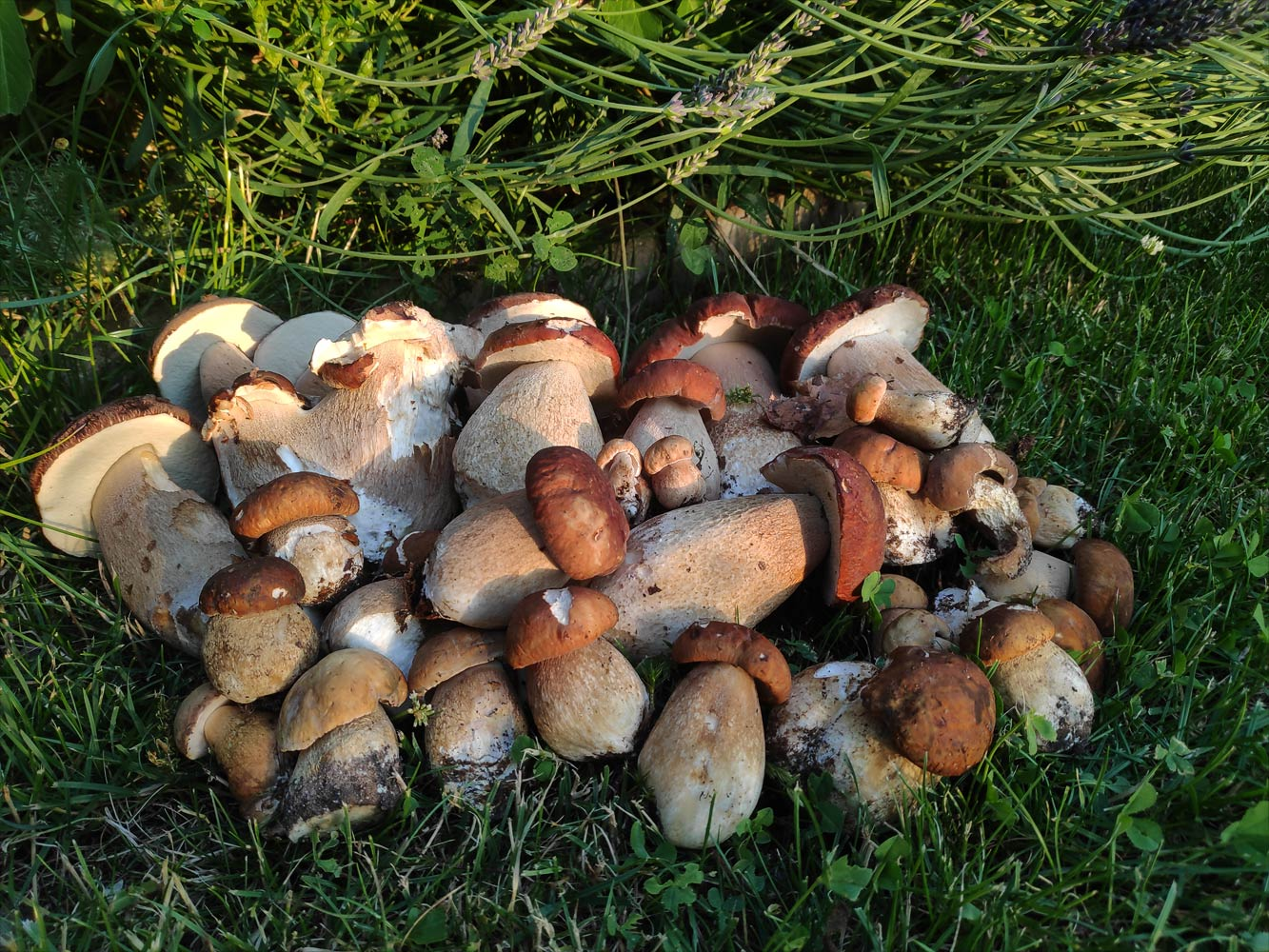 Еще немного грибов