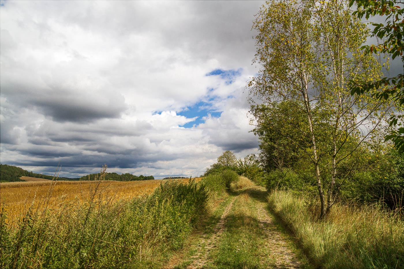 Прогулка по полям