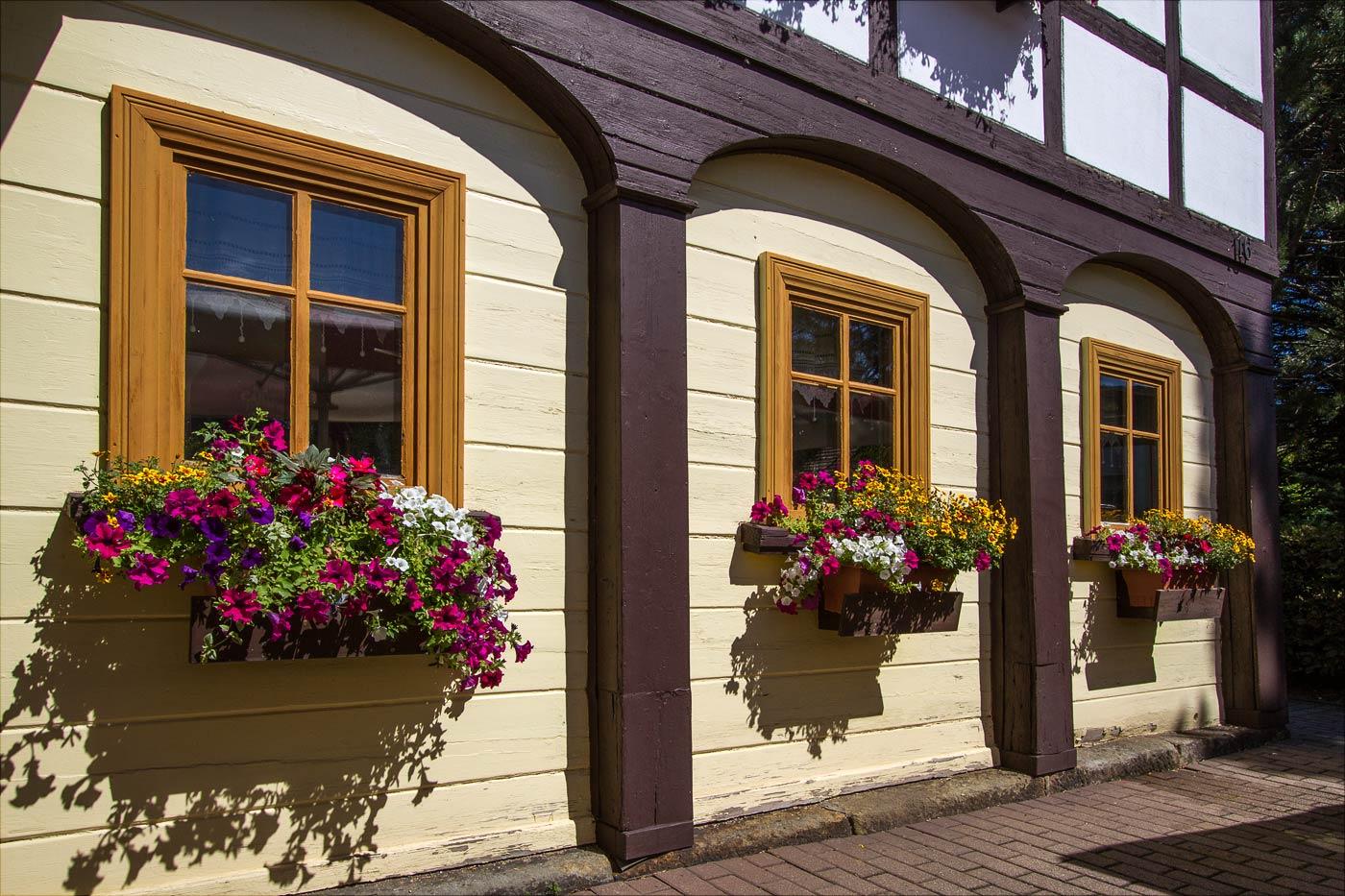 Цветы, саксонский горный курорт Йонсдорф