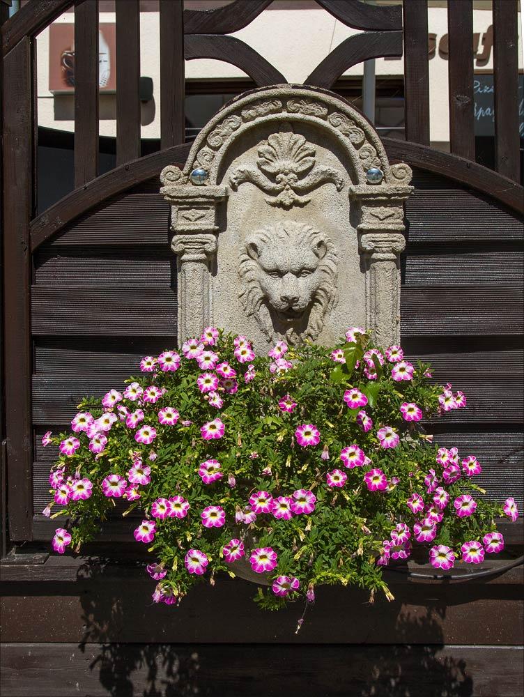 Цветы, Саксонский горный курорт Ойбин