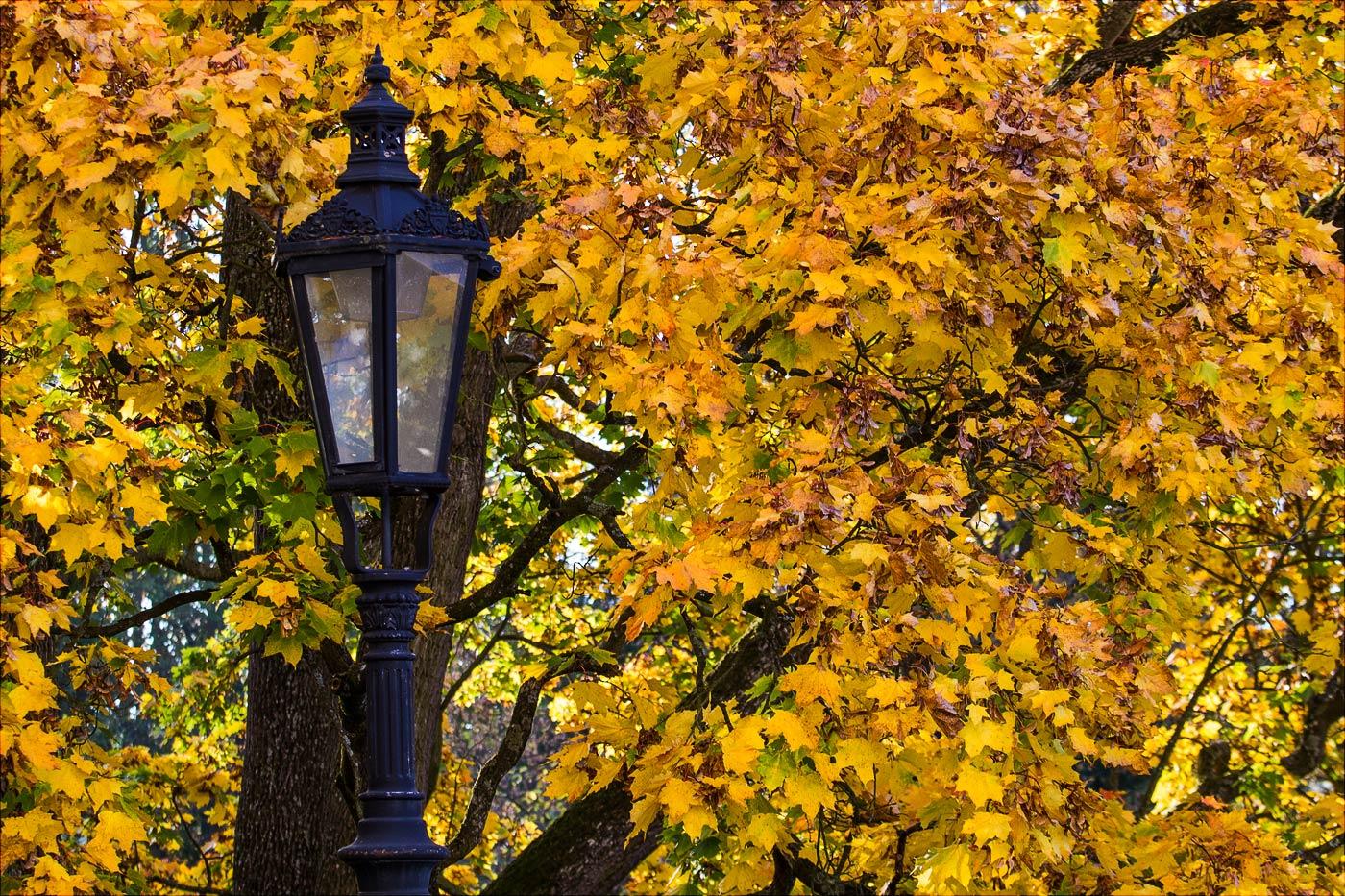 Осень в Конопиште