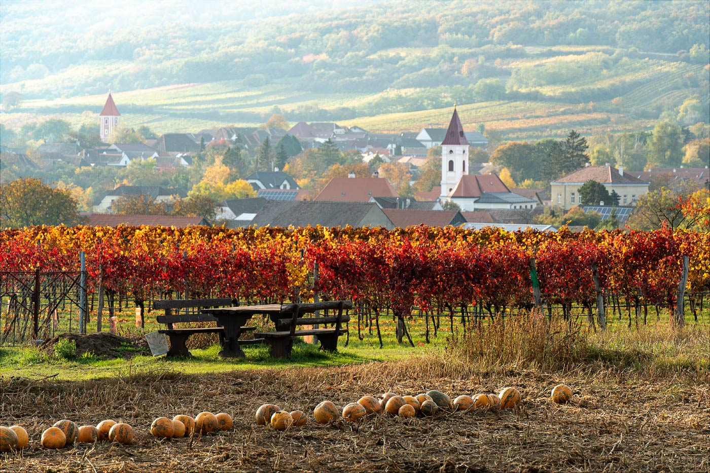 Осенние виноградники в Австрийском приграничьи