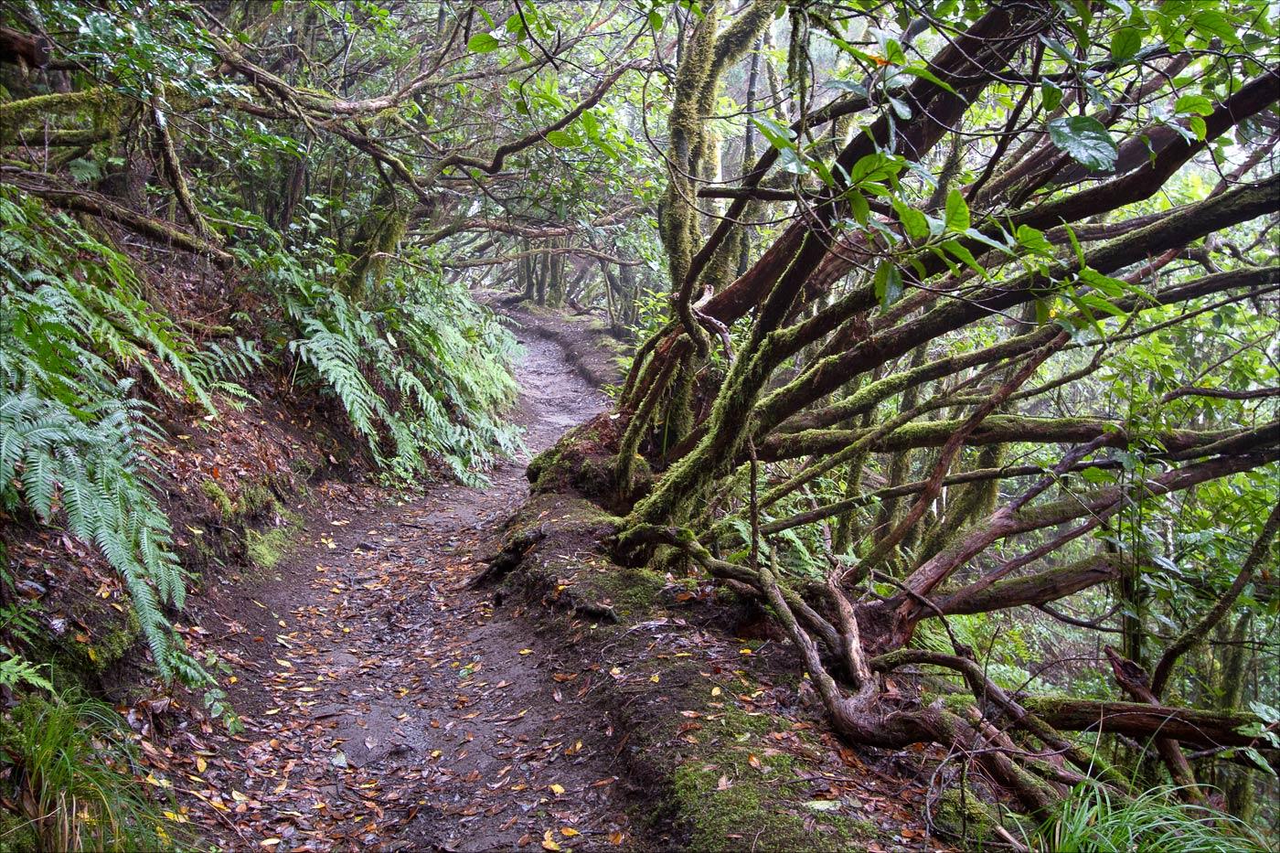 Реликтовый лес Анага