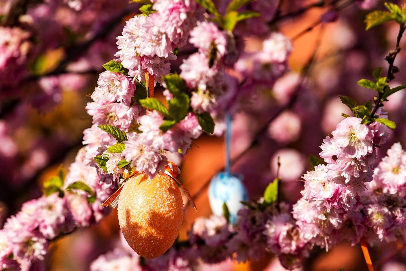 Цветущая сакура, пасхальные украшения