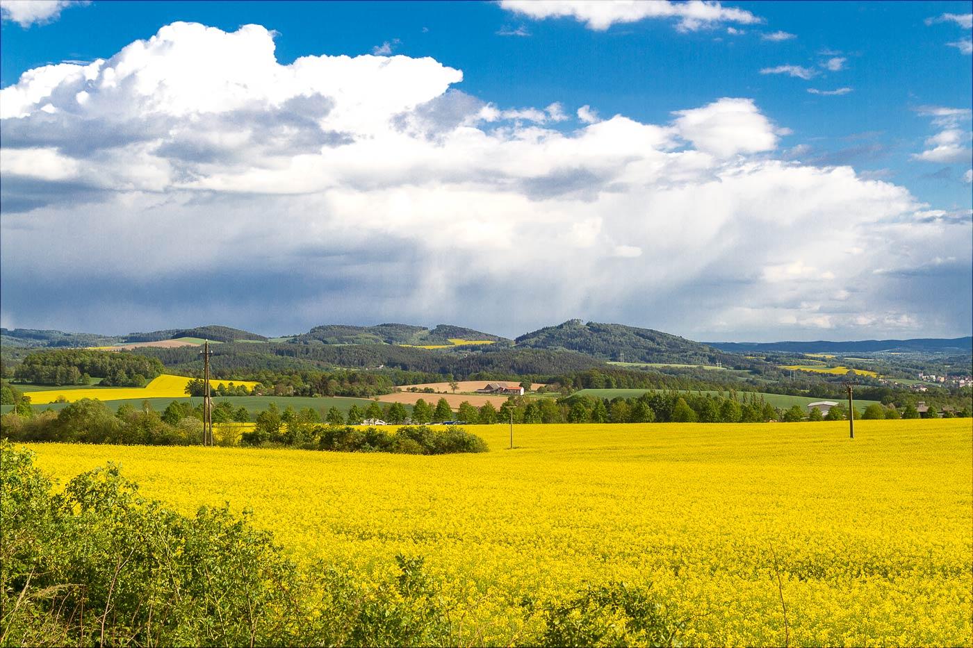 Рапсовые поля южнее Праги