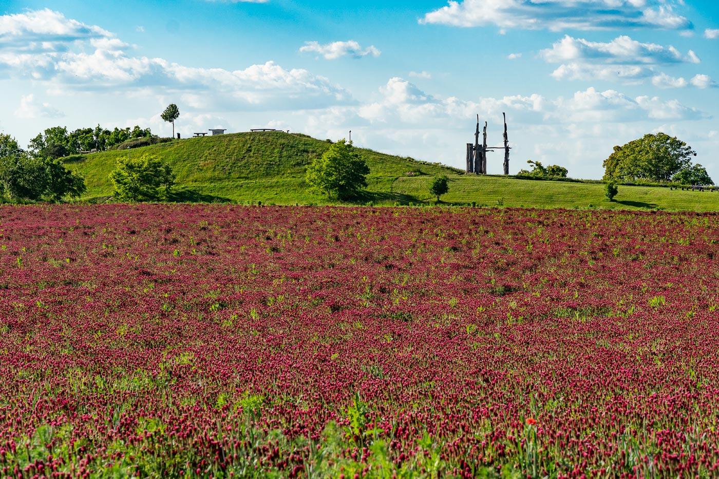 Цветущие поля у Колодейе