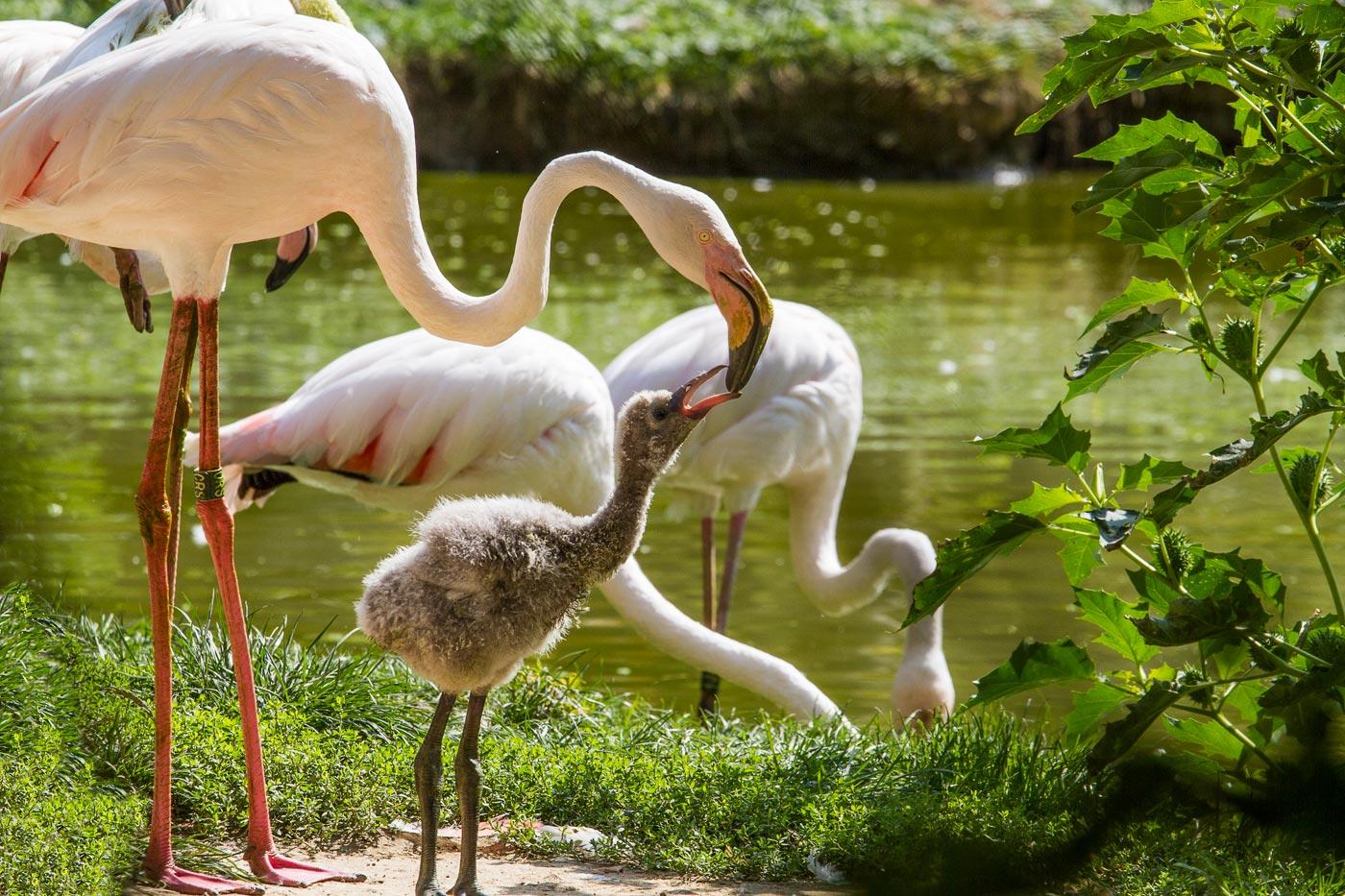 Злинский зоопарк