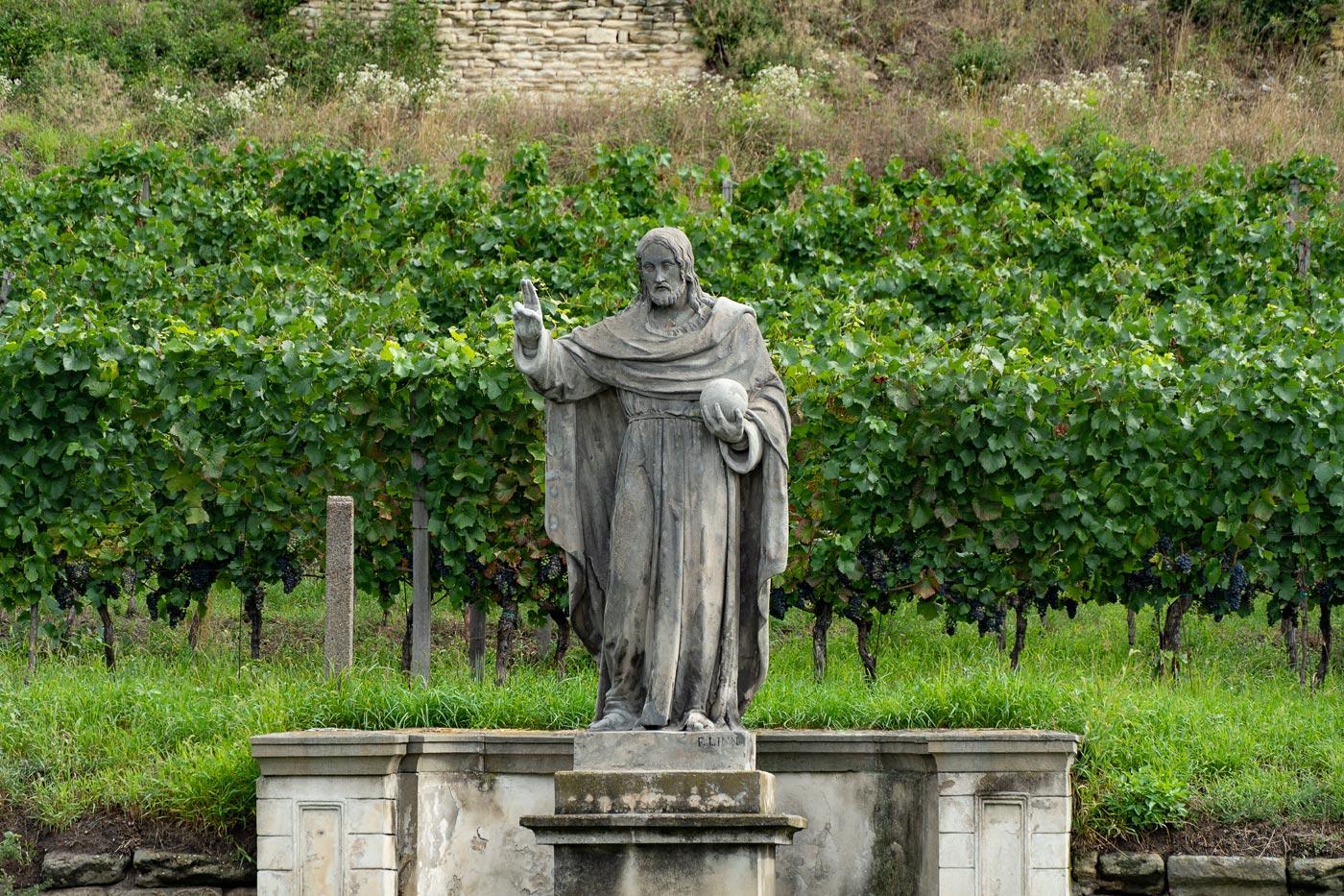 Виноградники у Либехова