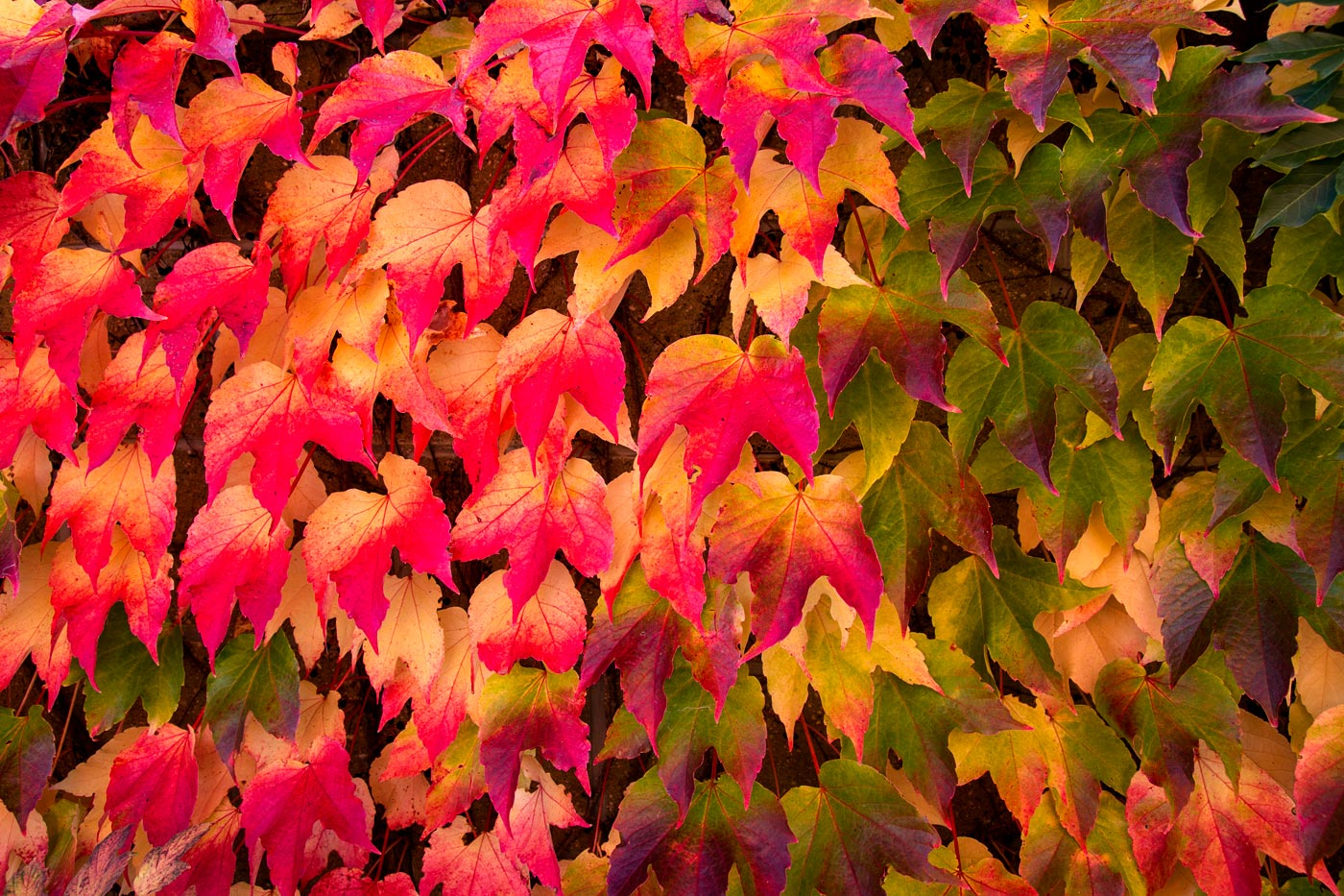 Золотая осень у нас в саду