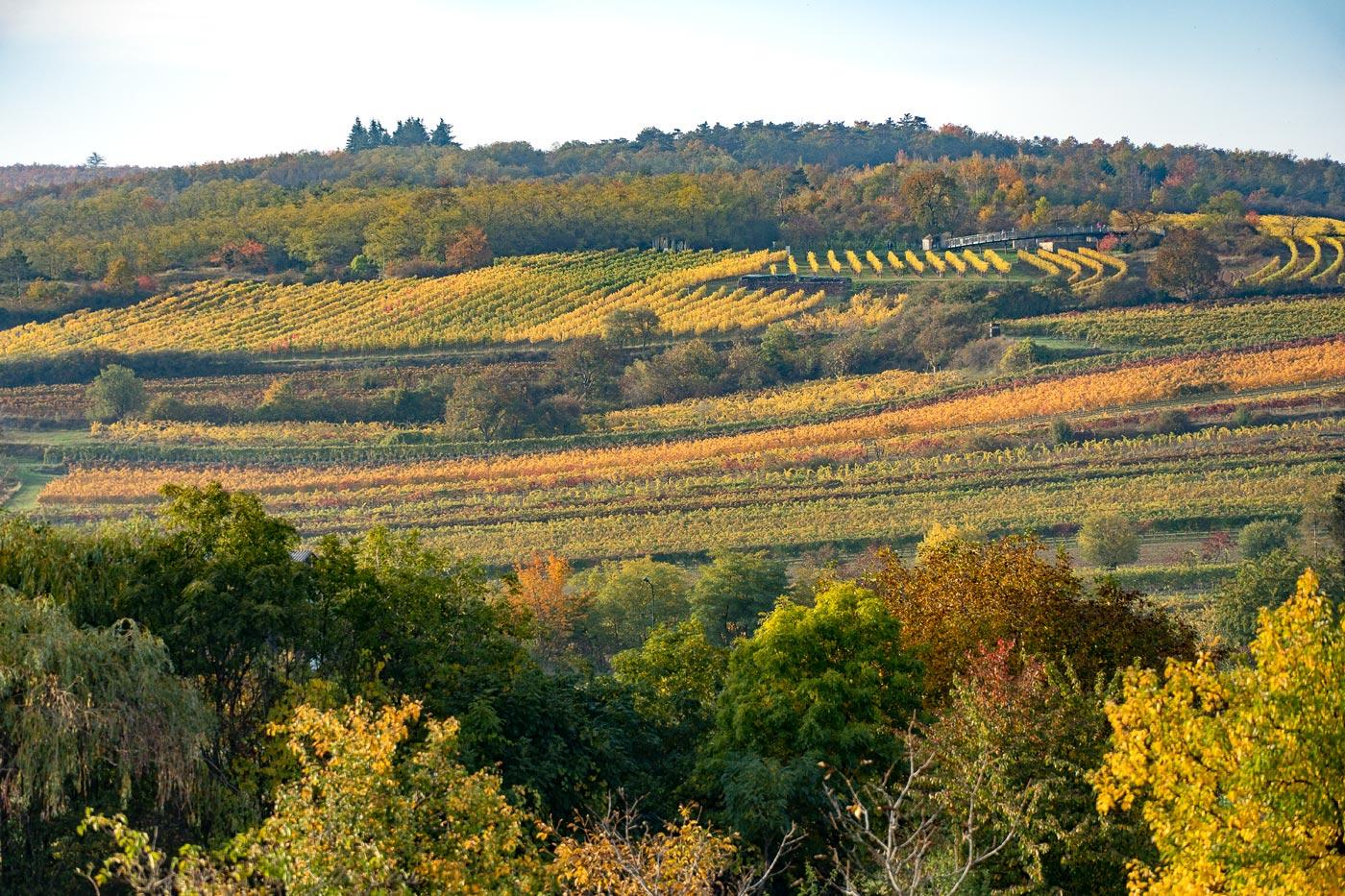 Виноградники южнее Зноймо