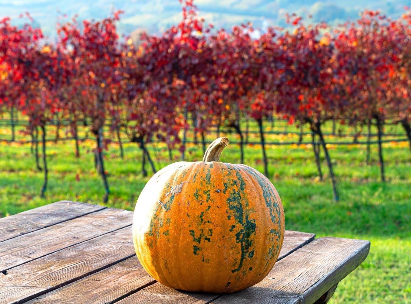 Осенние виноградники, приграничная Австрия