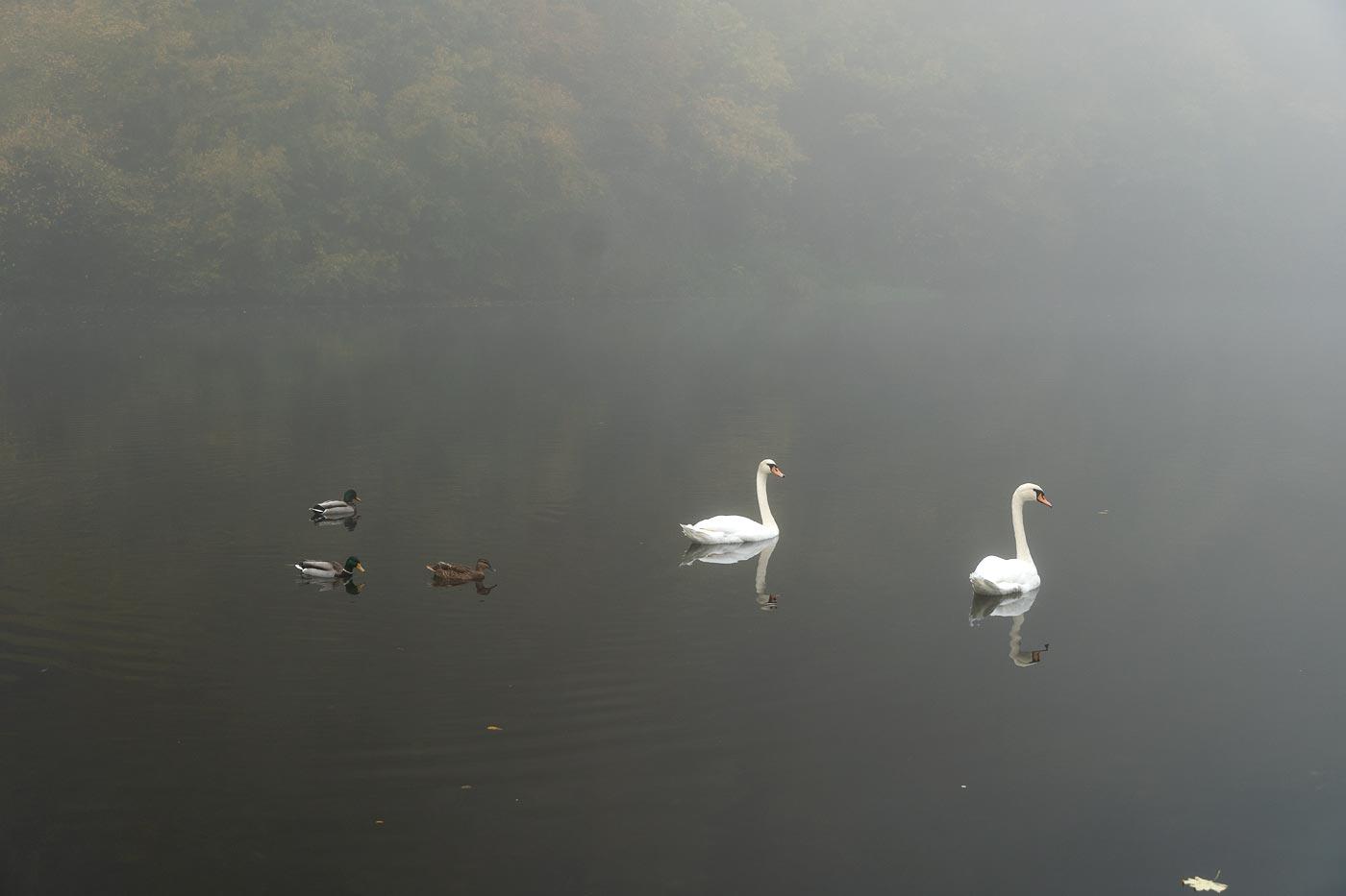 Туманное утро на реке Дие