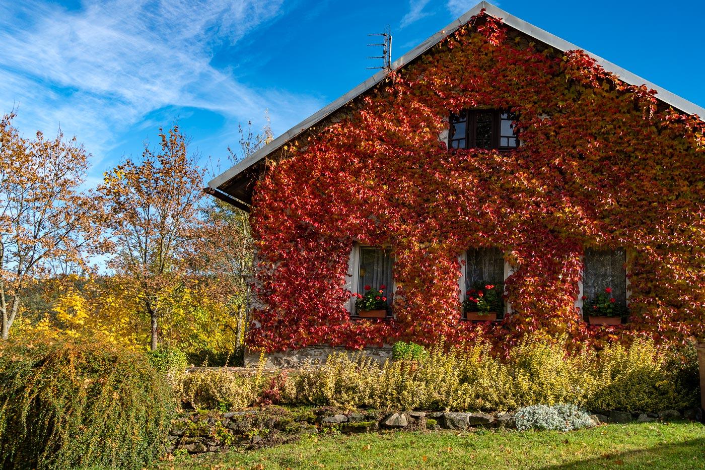 Дом, заплетенный виноградом