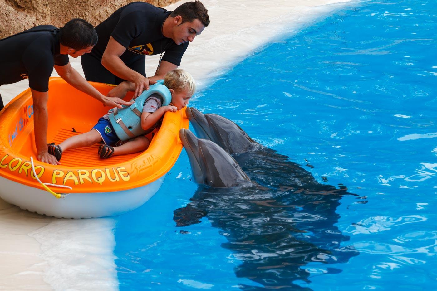 Этот день 8 лет назад: Аттракцион с дельфинами в Лоро парке, Тенерифе