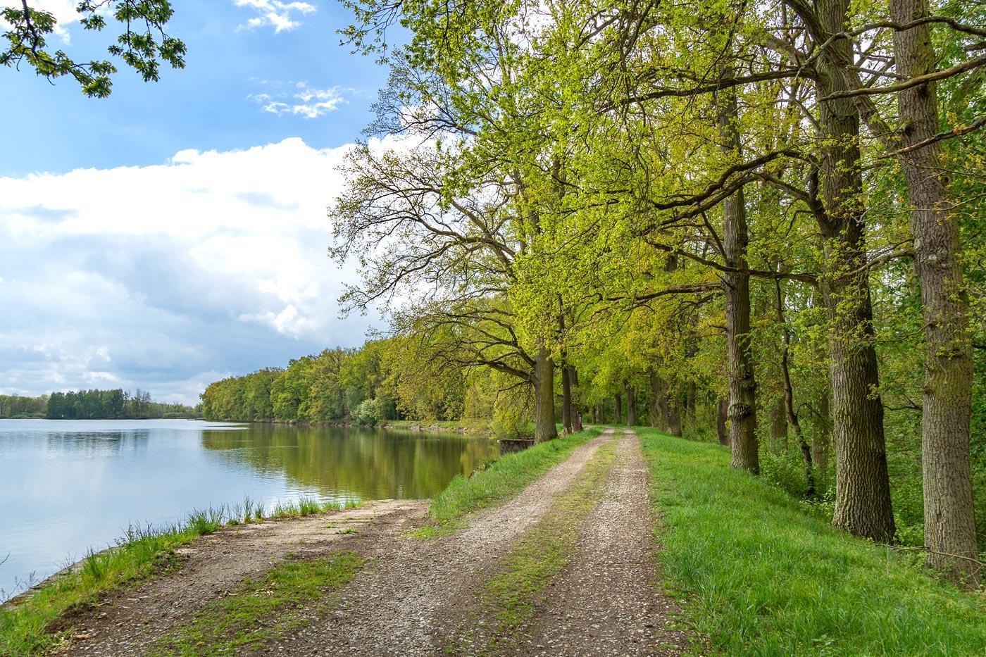 Прогулка у озер около Весели над Лужници, Южная Чехия