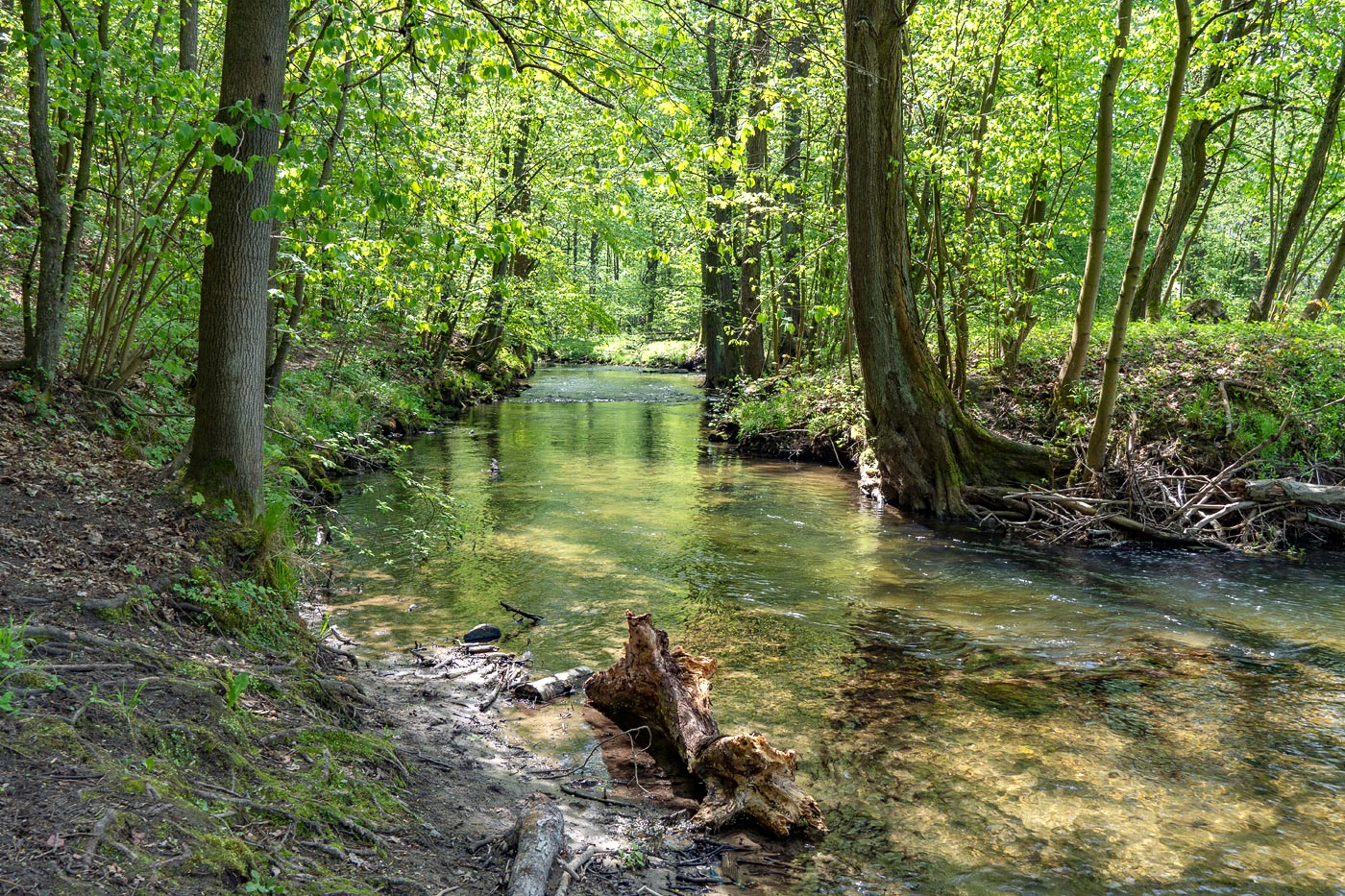 Прогулка вдоль реки Йизеры