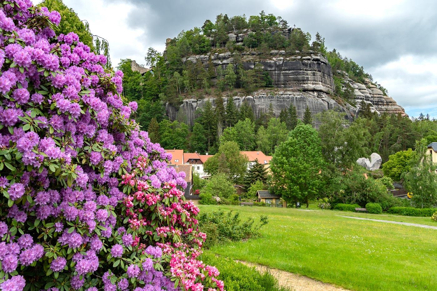 Цветущие рододендроны, Саксонский горный курорт Ойбин