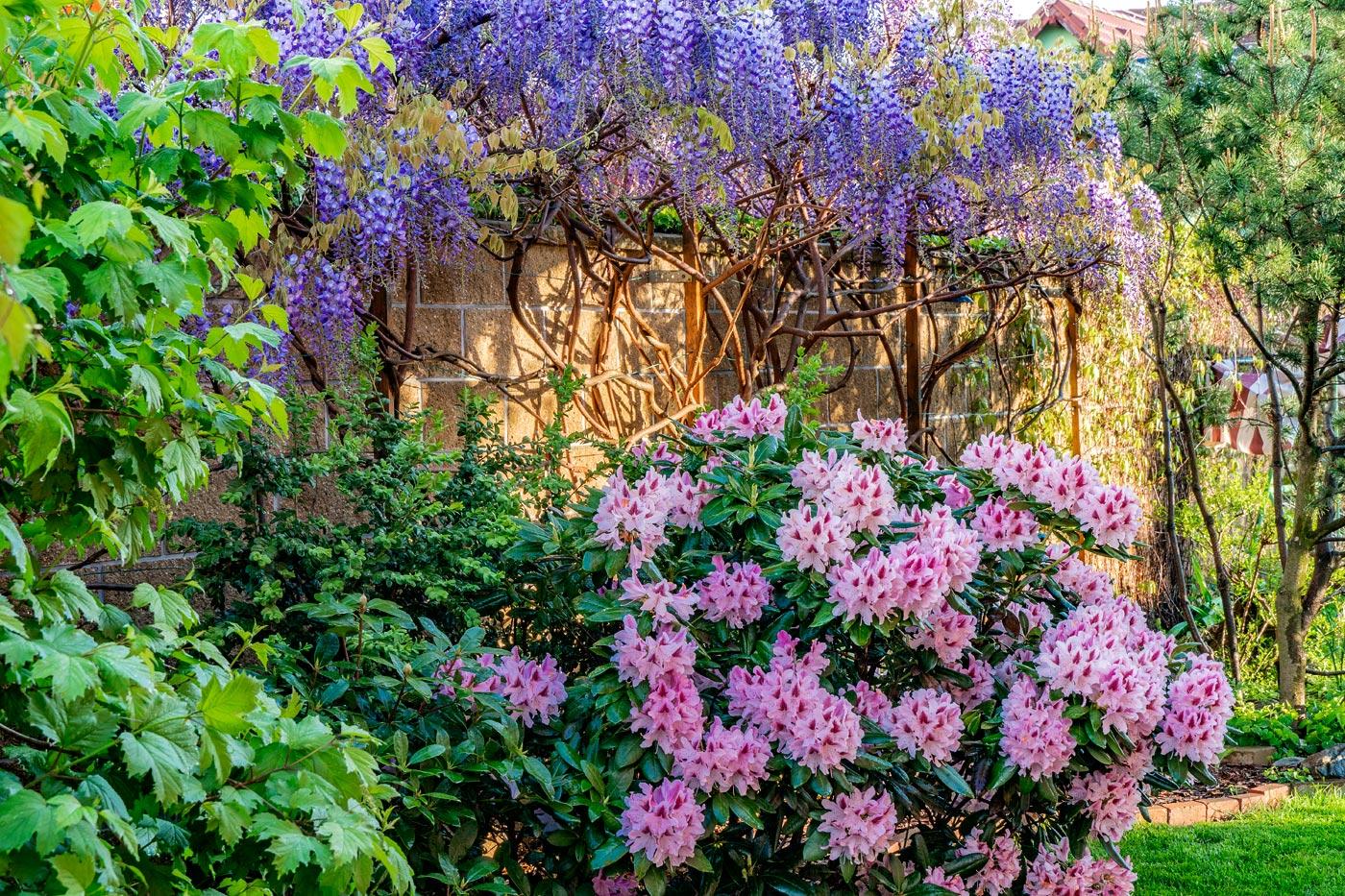 Цветение у нас в саду