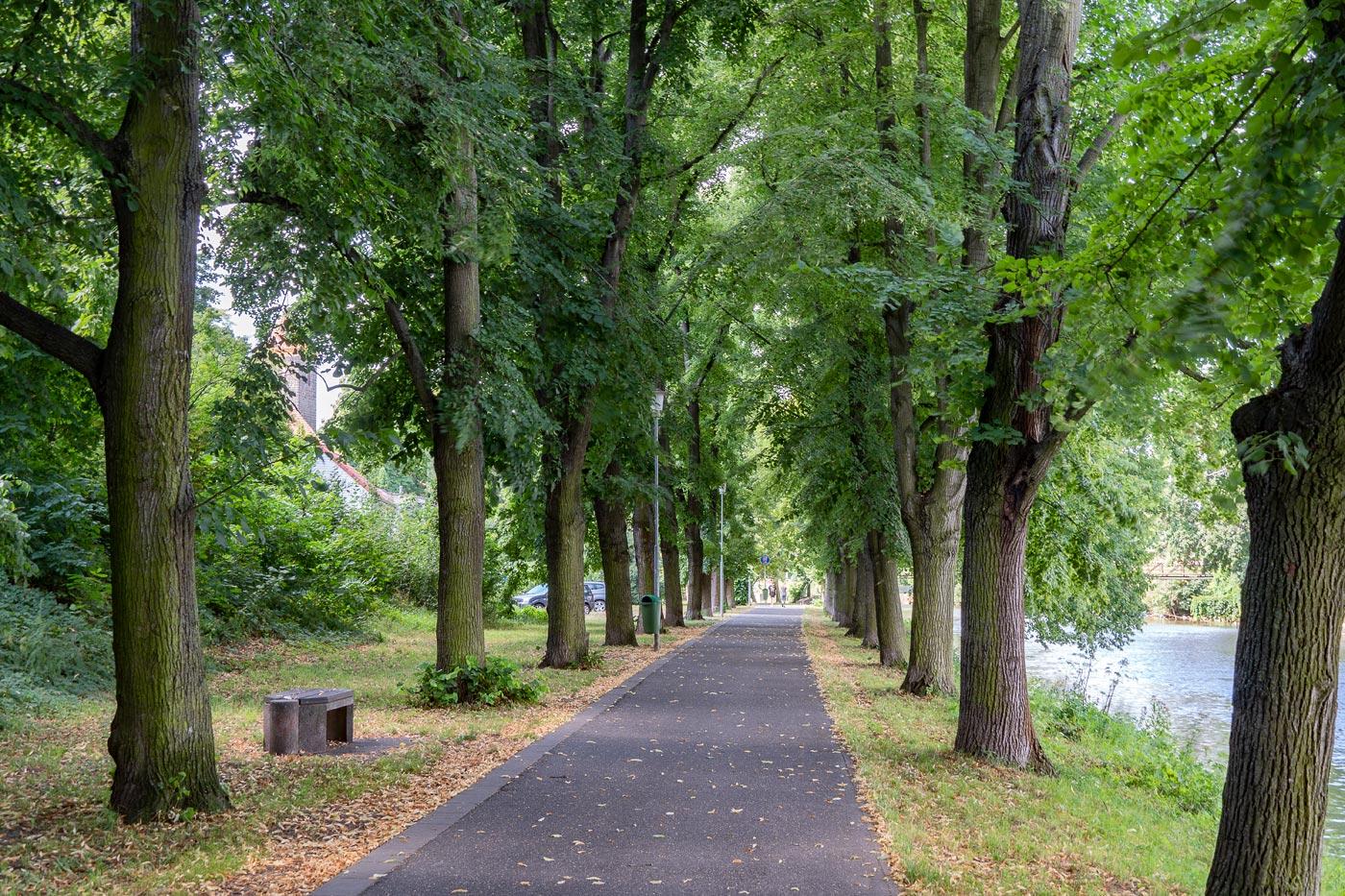 Аллея вдоль канала в Чаковице