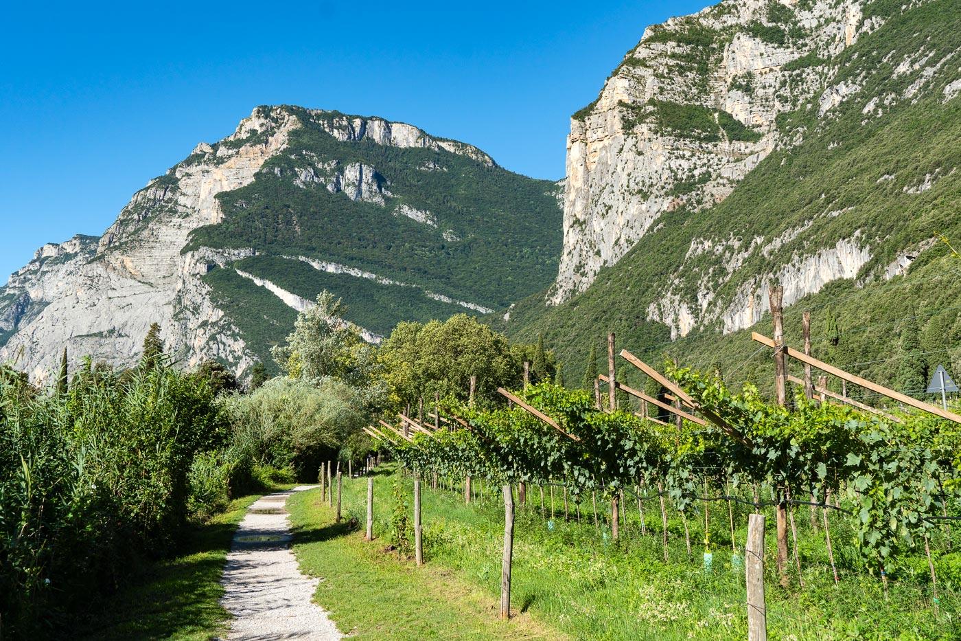 Северная Италия, виноградники в горах около замка Тоблино