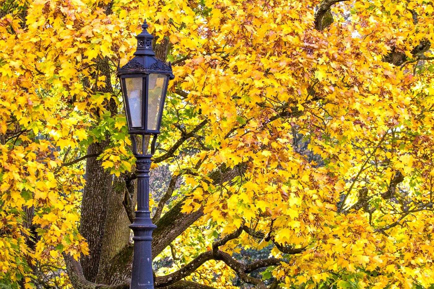 Золотая осень, Конопиштский парк