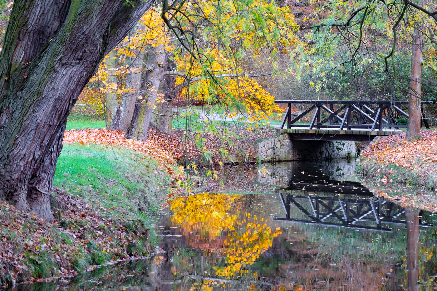 Осень в Пругоницком парке