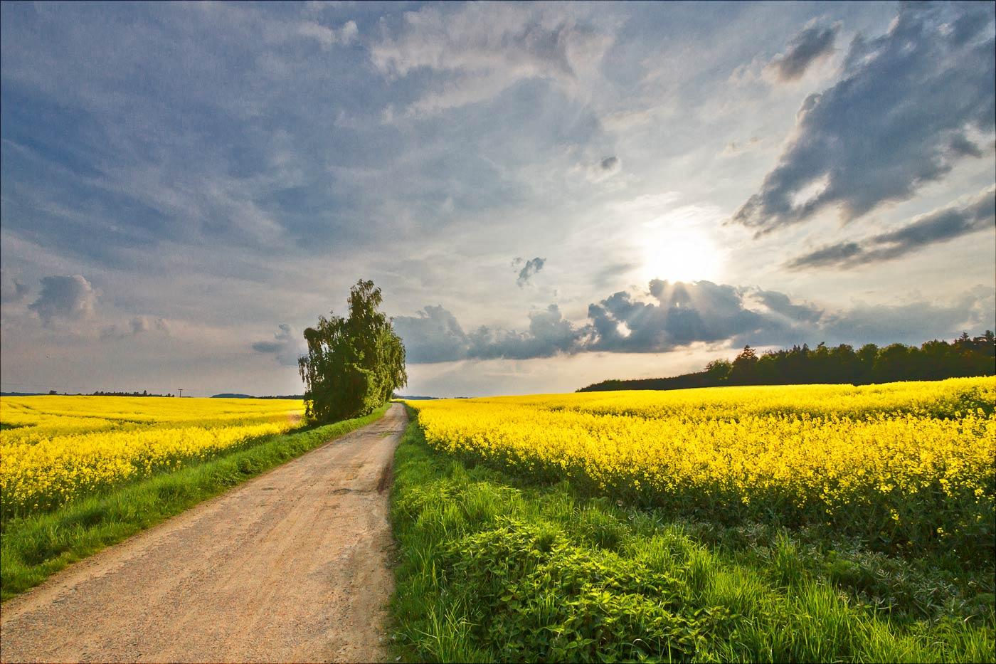 Проселочная дорога у Бенешова, Чехия