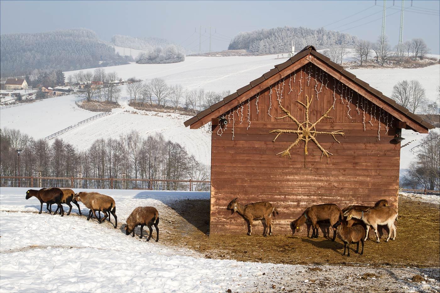 http://countryczech.com/wp-content/uploads/2017/02/photos/20170129-122818_Farmapark_Sobehrdy-2.jpg