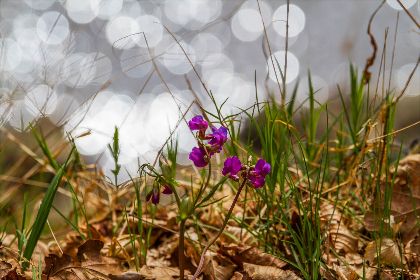 http://countryczech.com/wp-content/uploads/2017/03/photos/20160403-141235_Vltava_Kobyli_draha.jpg