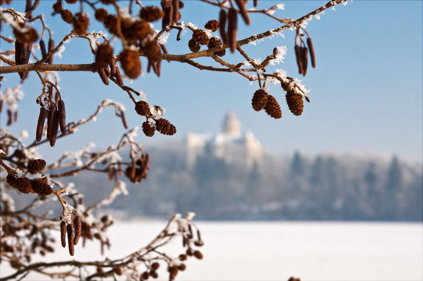 Снежный день в Пругоницком парке